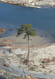 fsc_Japan_Erects_Massive_Sculpture_of_the_Last_Standing_Tree_from_a_Forest_Destroyed_by_the_2011_Tsunami_Colossal
