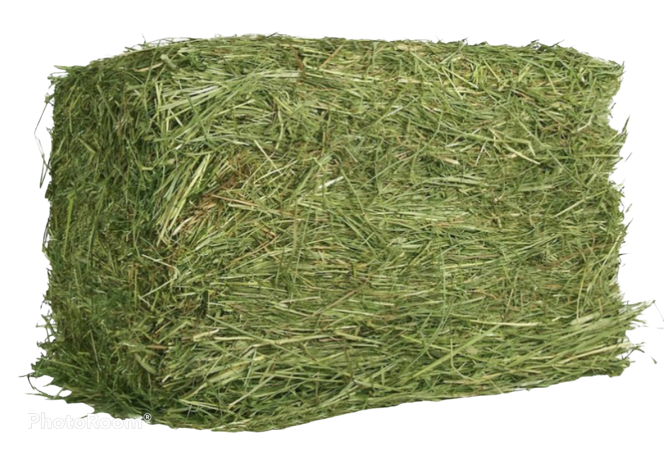Timothy Hay Grass